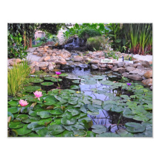 Lily Pads in a Creek Photograph