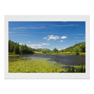 Lily Pads on Long Pond Acadia National Park Poster