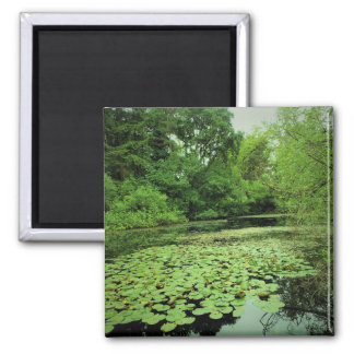 Lily Pads on the Pond Magnet