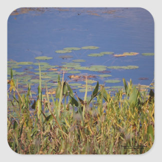 Lily Pads Square Sticker