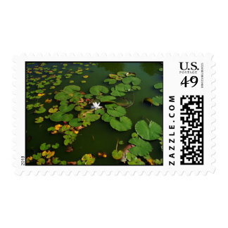 Lily Pads Stamp