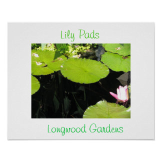 Lily Pads with Flower at Longwood Gardens Poster