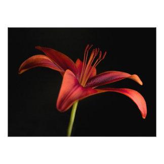 Lily Photo Print