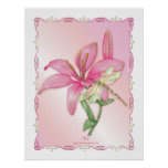 Lily Pink Posters