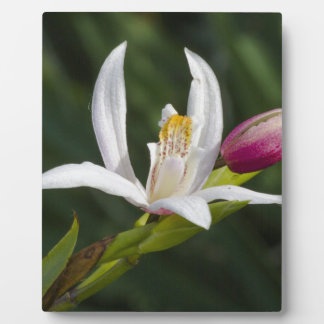lily plaques