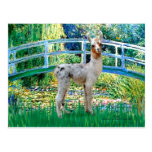 Lily Pond Bridge - Baby Llama Postcard
