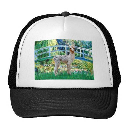 Lily Pond Bridge - Baby Llama Trucker Hat