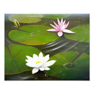 Lily Pond Photo
