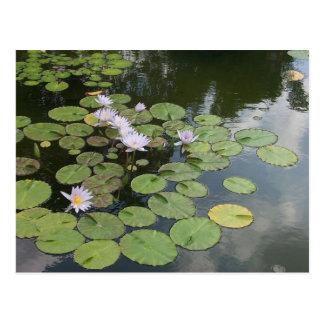 Lily Pond Postcard
