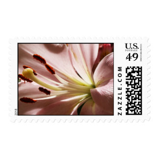 Lily Postage Stamp