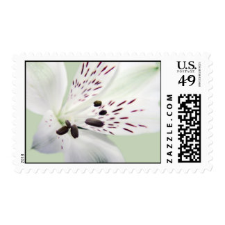 Lily Postage