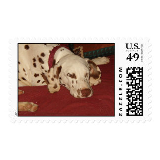 Lily Postage Stamps