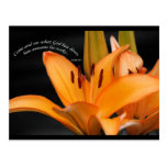 Lily Postcard with scripture