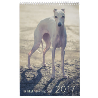 Lily the Whippet 2017 Calendar