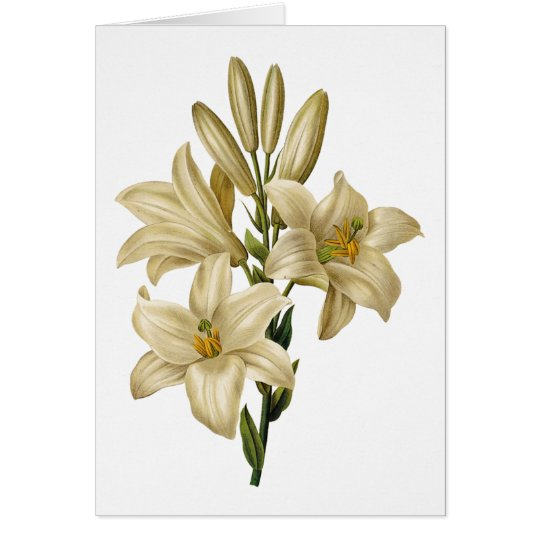 Lily Watercolor Blank Note Card