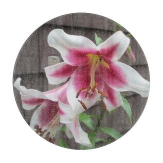 Lily White Purple Large Plant