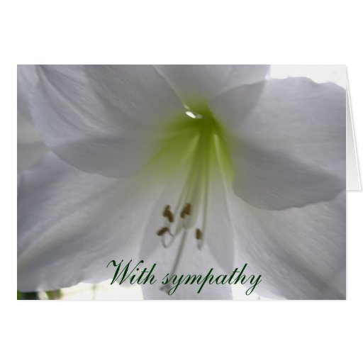 Lily With sympathy Greeting Cards