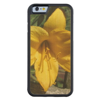 Lily Yellow Weathered Fence Carved Maple iPhone 6 Bumper Case