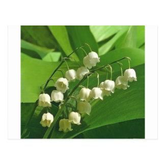 lilyofthevalley postcard