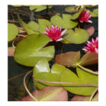 Lilypad and Flowers Poster