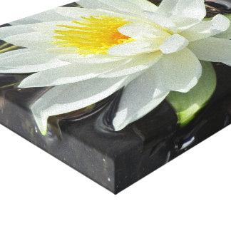 Lilypad bloom canvas print