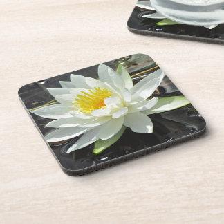 Lilypad bloom drink coaster