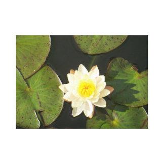 Lilypad de florecimiento impresión en lienzo