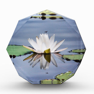 lilypad flower award