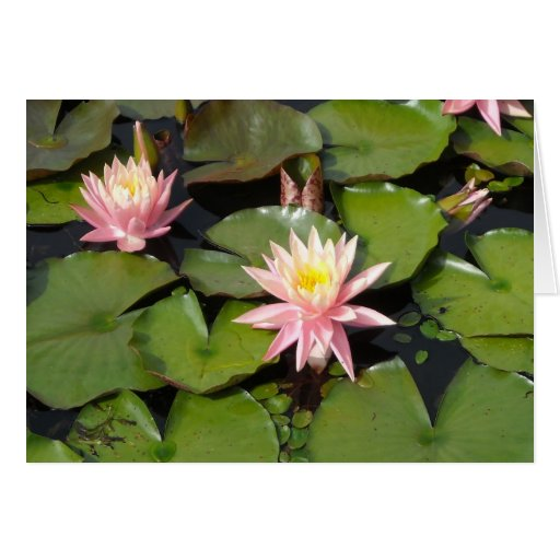 Lilypad Flowers Notecards Stationery Note Card