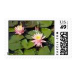Lilypad Flowers Postage