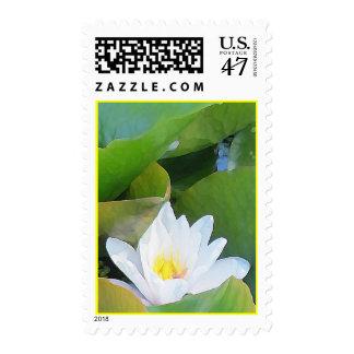 Lilypad Postage
