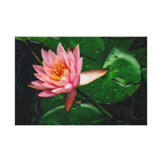 Lilypad rosado impresión en lienzo
