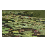 Lilypads #3 Impressionism Art Print