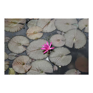 Lilypads Posters