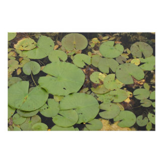 Lilypads Poster - full bleed
