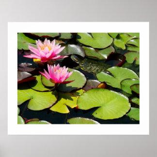 Lilypads & Turtle Print