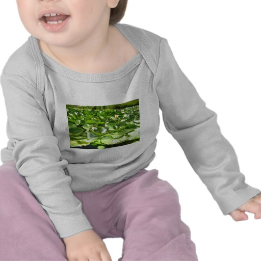 lilypads verdes grandes en una charca camisetas