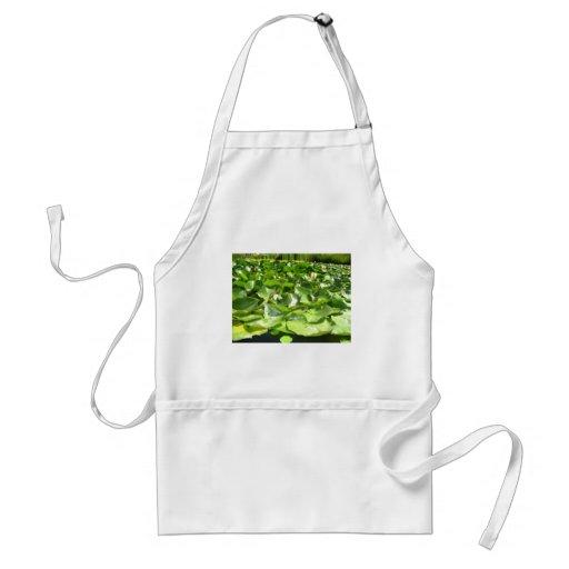 lilypads verdes grandes en una charca delantal