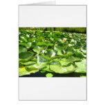 lilypads verdes grandes en una charca tarjetas