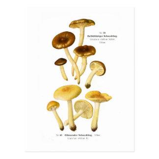 Limacium vitellum & L.nitdum Post Cards