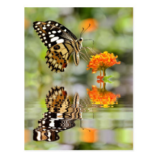 Lime butterfly above water with reflection postcard