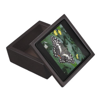 Lime Butterfly and Flowers Premium Gift Box