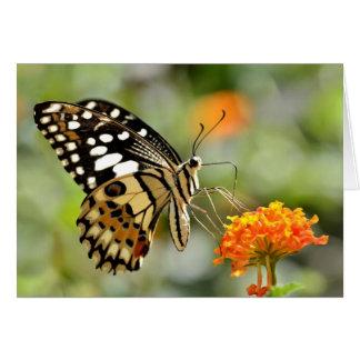 Lime butterfly feeding on flower card