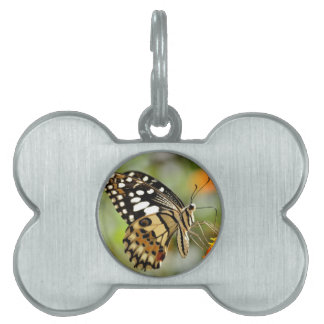 Lime butterfly feeding on flower pet name tag