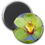 Lime Cymbidium flowers 2 Inch Round Magnet