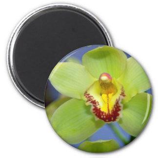 Lime Cymbidium flowers Magnet