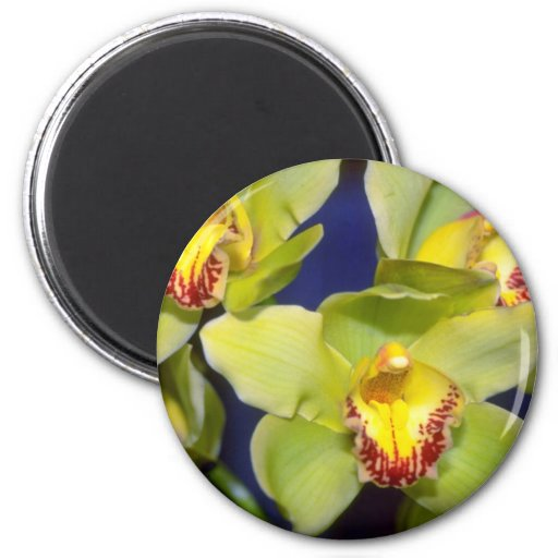 Lime Cymbidium flowers Refrigerator Magnet