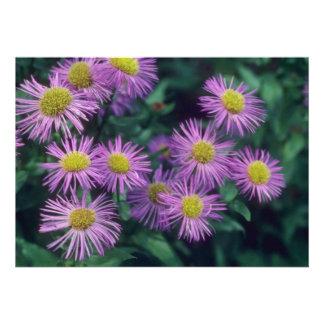 Lime Merstham Glory, (Erigeron) flowers Personalized Invites