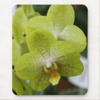 Lime phalaenopsis Orchid Mouse Pad