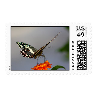 Lime swallowtail postage stamp